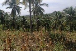 Farm Lot for Sale in Argao, Cebu
