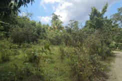 Farm Lot for Sale in Balamban, Cebu
